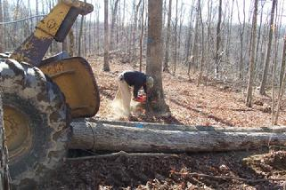 Arnzen Forestry Services - Kentucky forestry and timber consultant